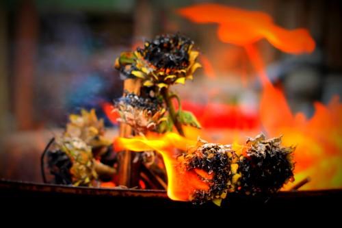 Sunflower burning _ lifeofpix.com _ Andymuns 01.09.2015