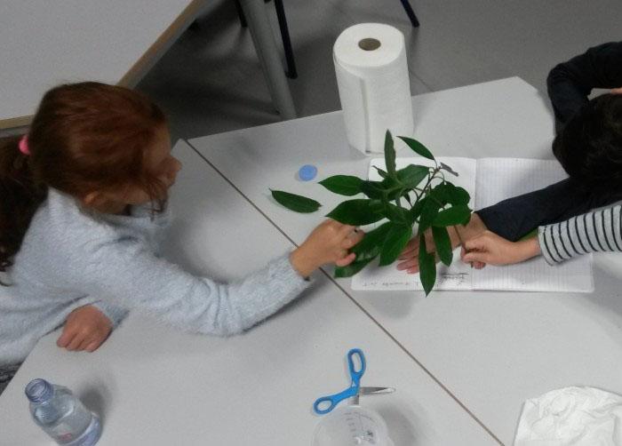 wax science atelier virtuel n 5 les plantes l eau et la lumi re. Black Bedroom Furniture Sets. Home Design Ideas